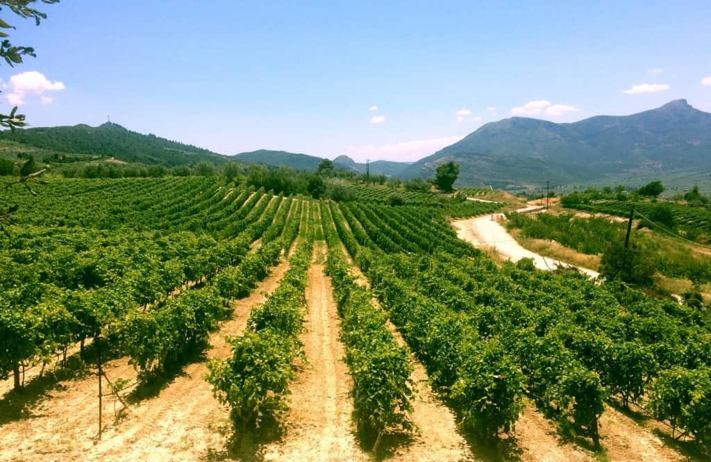 wine1-e1515521118275