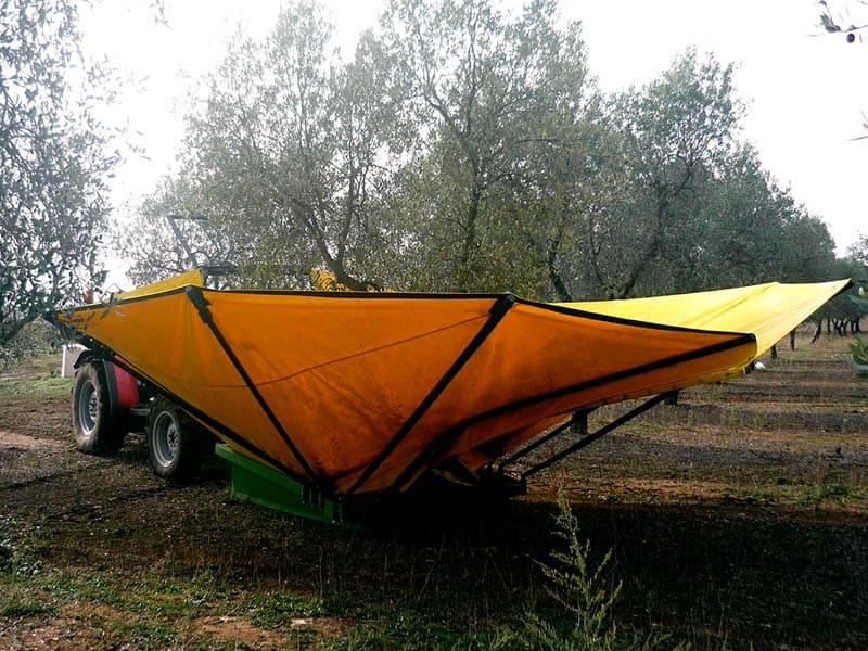 olives-464988_1280