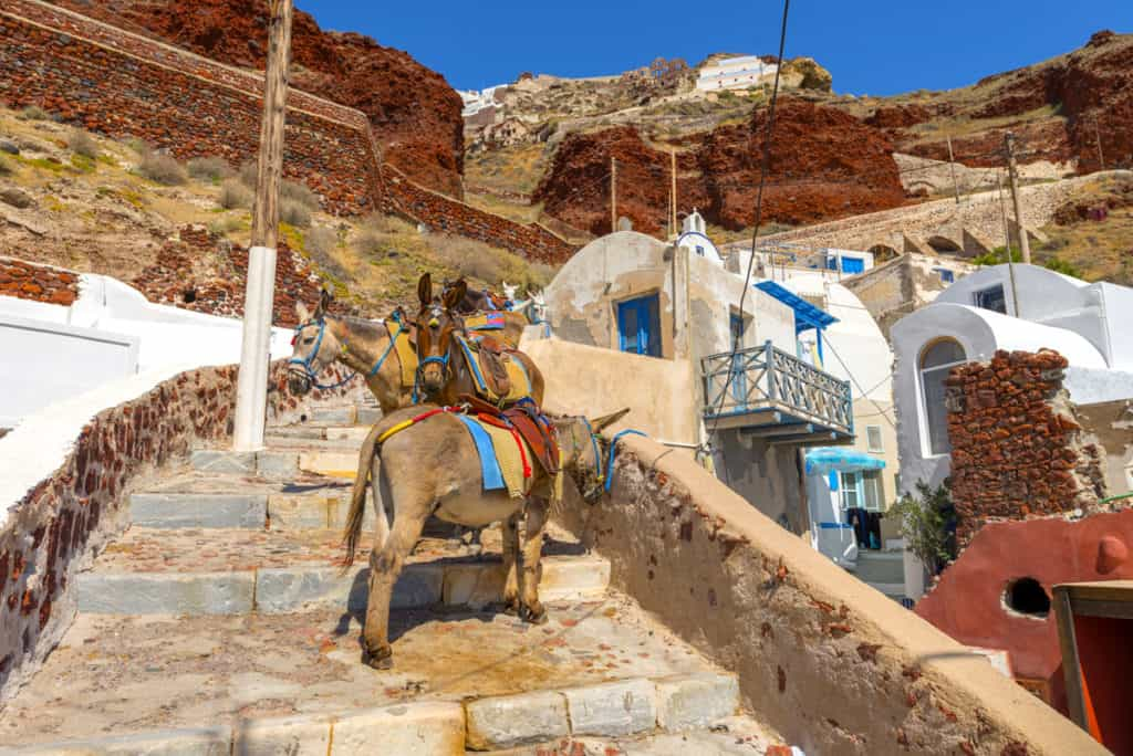 santorini with donkeys on a narrow path
